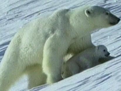 Why Eating Kangaroo Can Save Polar Bears