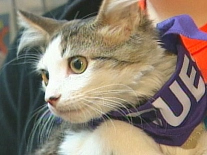 VIDEO: Pets displaced after Hurricane Katrina