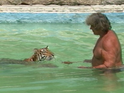VIDEO: Swimming With a Tiger