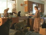 VIDEO: Inside the world of cat ladies