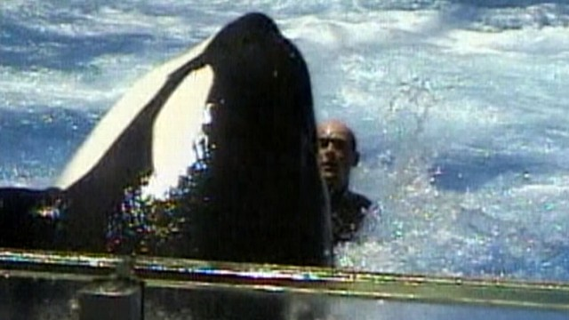 VIDEO: A killer whale trainer was pulled underwater repeatedly in 2006.