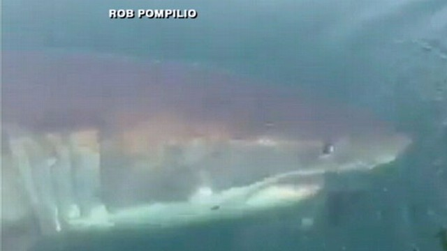 VIDEO: Great White Shark Circles Boat Off NJ Coast