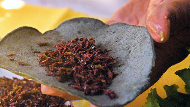 PHOTO: Grasshoppers, (chapulines) are sometimes used in Mexican cuisine, like in this Taco at a Mexico City restaurant. Two students in Monterrey however, are trying to increase consumption of this protein-rich critter, by putting it into cookies.