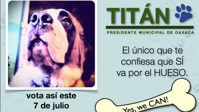 PHOTO: Titan, a St Bernard, is running for mayor of Oaxaca, Mexico.