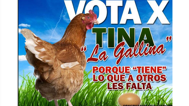 PHOTO: Tina, a Hen, is running for mayor of Tepic, Mexico.