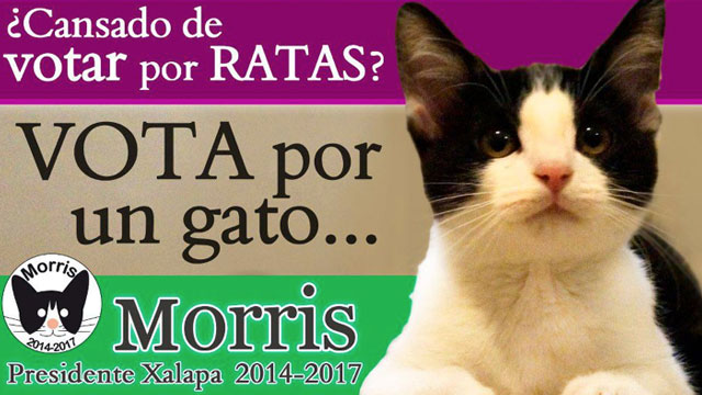 """PHOTO:""""Tired of rats, vote for a cat,"""" says this campaign poster for Morris, a cat that is """"running"""" for mayor of Jalapa, Mexico. In Mexico """"rats"""" is a euphemism used for corrupt politicians."""