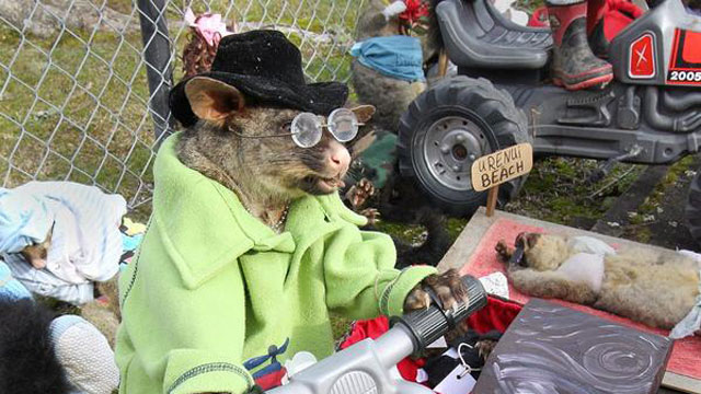 PHOTO: My, what an awesome possum.
