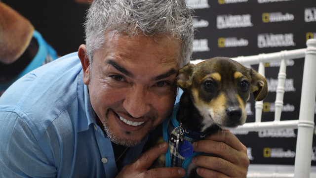 PHOTO: MIAMI, FL - OCTOBER 15: Cesar Millan attends screening of Of El Lider De La Manada on October 15, 2012 in Miami, Florida.