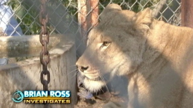 VIDEO: Debate grows over private ownership of exotic animals.