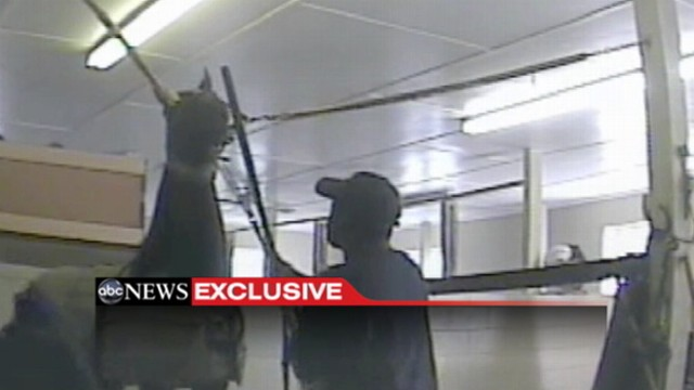 VIDEO: Hidden-camera investigation finds alleged torture of Tennessee Walking Horses.