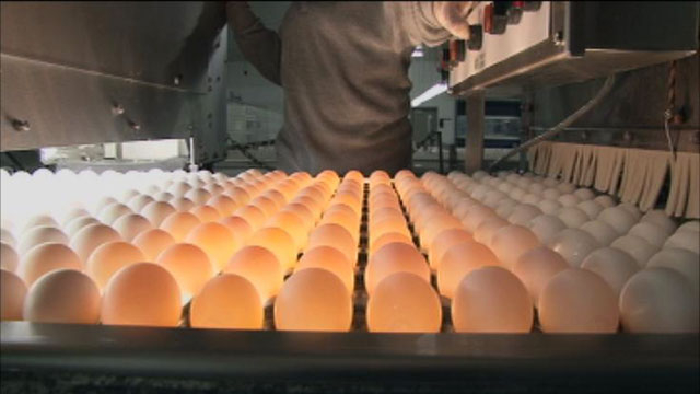 "PHOTO: Sparboe produces hundreds of millions of eggs and claims it has never discovered salmonella in a single egg. Ken Klippen of Sparboe told ABC News, ""Ive been at barns all around the world, this is state of the art when it comes to egg production."""