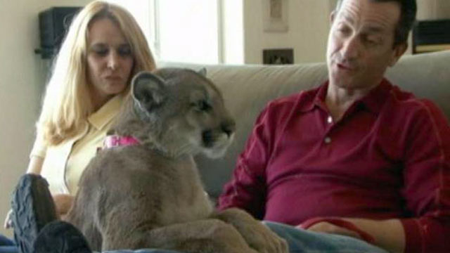 PHOTO:The escape of wild domestic animals in Ohio shined a spotlight on lax laws when it comes to exotic pets.