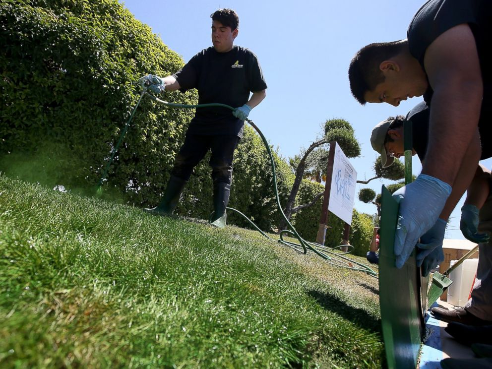 PHOTO: Green Canary worker Josue Bojorquez sprays green water-based paint on a partially dead lawn