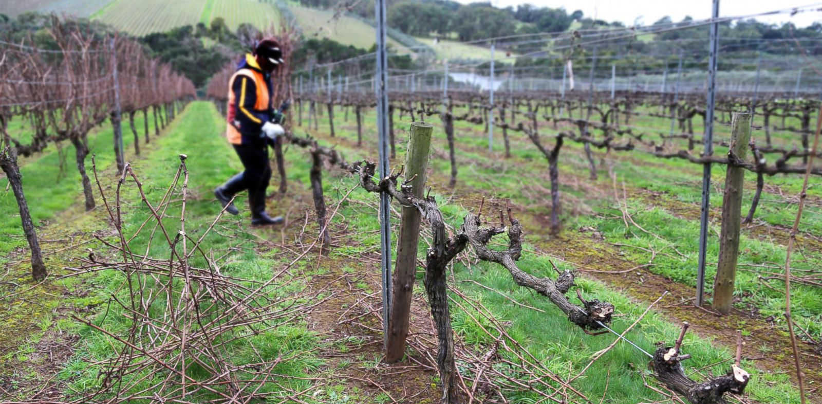 PHOTO: According to Morgan Stanely, declining wine production will not be able to meet future demand.
