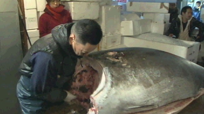 VIDEO: A giant bluefin tuna nets record price at fish market in Tokyo.