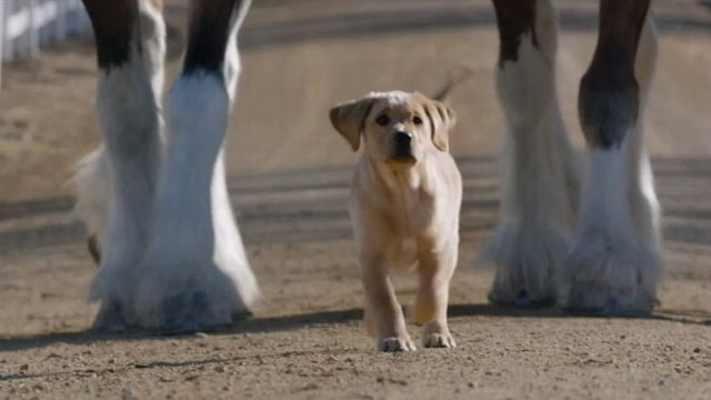 VIDEO: Super Bowl commercial tugs at the heart-strings by featuring animals with a special bond.