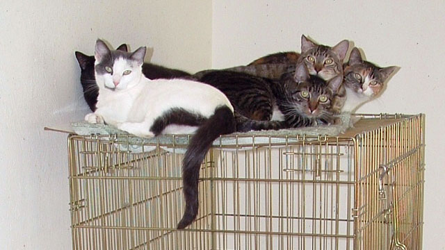 PHOTO: Rescued feral cats