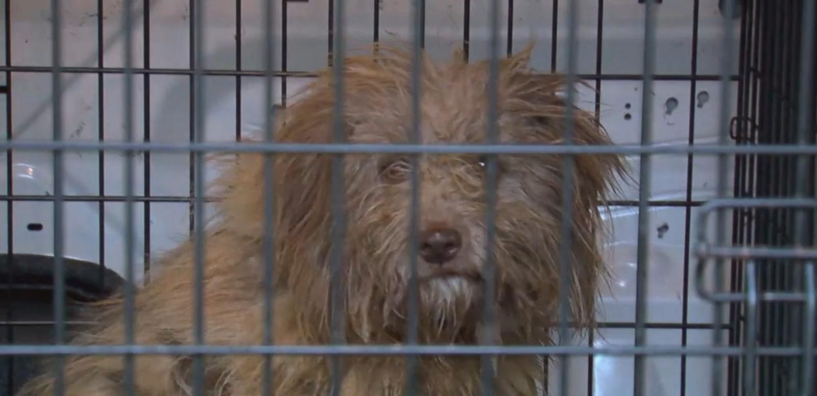 VIDEO: Dog Missing for Over a Year Found in Maryland Storm Drain