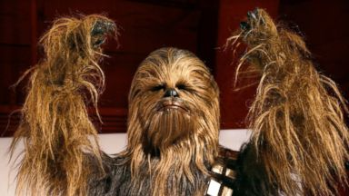 PHOTO: A yak hair and mohair costume of the Wookiee Chewbacca is displayed as part of an exhibit on the costumes of Star Wars at Seattles EMP Museum, Jan. 29, 2015.