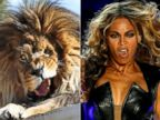 PHOTO: Captured in mid-roar, this Lion shows a striking resemblance to superstar Beyonce during her 2013 Superbowl Performance.