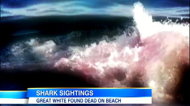 VIDEO: Authorities force swimmers out of the water at some of U.S.s most visited beaches.