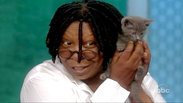 PHOTO: Whoopi Goldberg has adopted a cat that was thrown from a moving car in New York.
