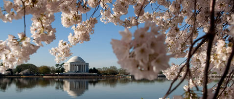 gty opening shot dm 120315 wblog Cherry Blossom Centennial Celebration 2012: How the Cherry Trees Came to Washington, D.C.