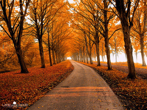 ht Lars Van De Goor 02 nt 111121 Fall Foliage From Lars van de Goor