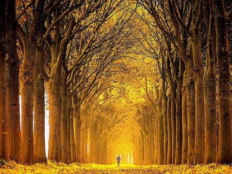 ht Lars Van De Goor 03 nt 111121 Fall Foliage From Lars van de Goor