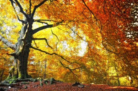 ht Lars Van De Goor 04 nt 111121 Fall Foliage From Lars van de Goor