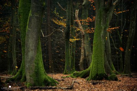 ht Lars Van De Goor 05 nt 111121 Fall Foliage From Lars van de Goor