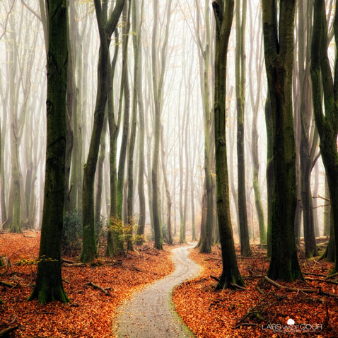 ht Lars Van De Goor 07 nt 111121 Fall Foliage From Lars van de Goor
