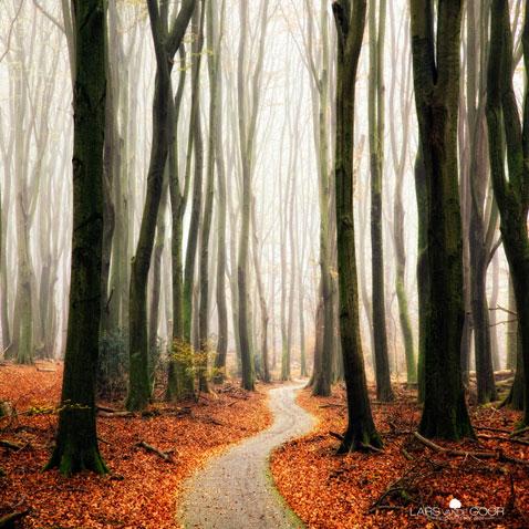 ht Lars Van De Goor 07 nt 111121 Fall Foliage From Lars van de Goor