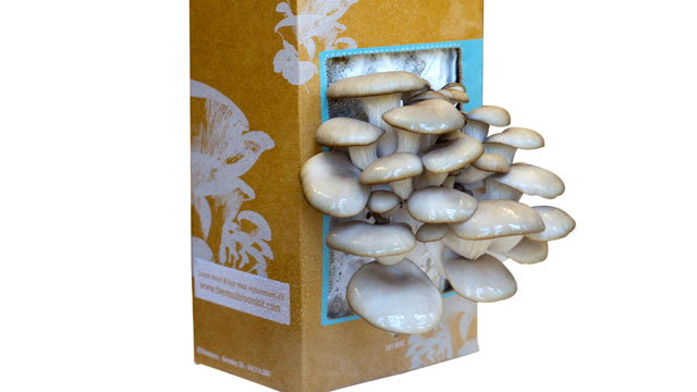 "PHOTO: The ""Back to the Roots"" mushroom growing kit is shown here."