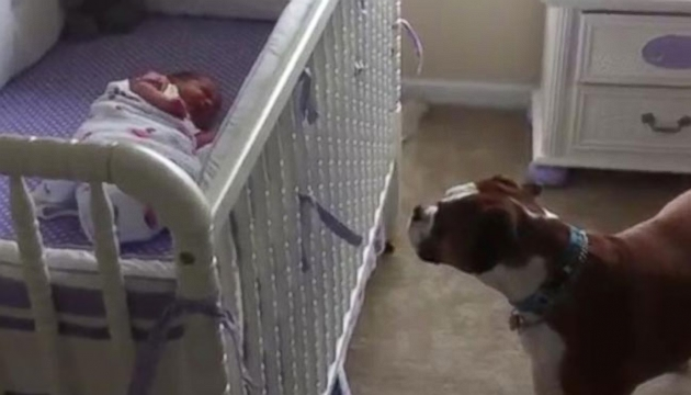 VIDEO: Watch as this boxer empathizes with his crying newborn sister.