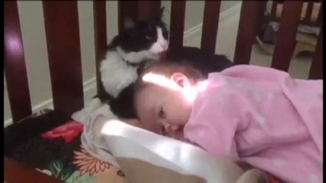 VIDEO: Cat Gives Baby a Bath