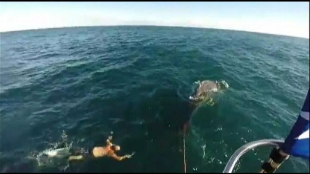 VIDEO: After New Zealand fisherman Joe Brogan saw a baby whale tangled in his boats rope, he knew there was only one thing to do.