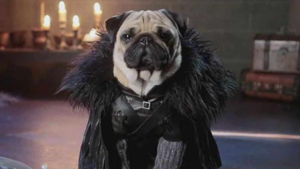 """VIDEO: Adorable pugs reenact scenes from the popular HBO show, """"Game of Thrones."""""""