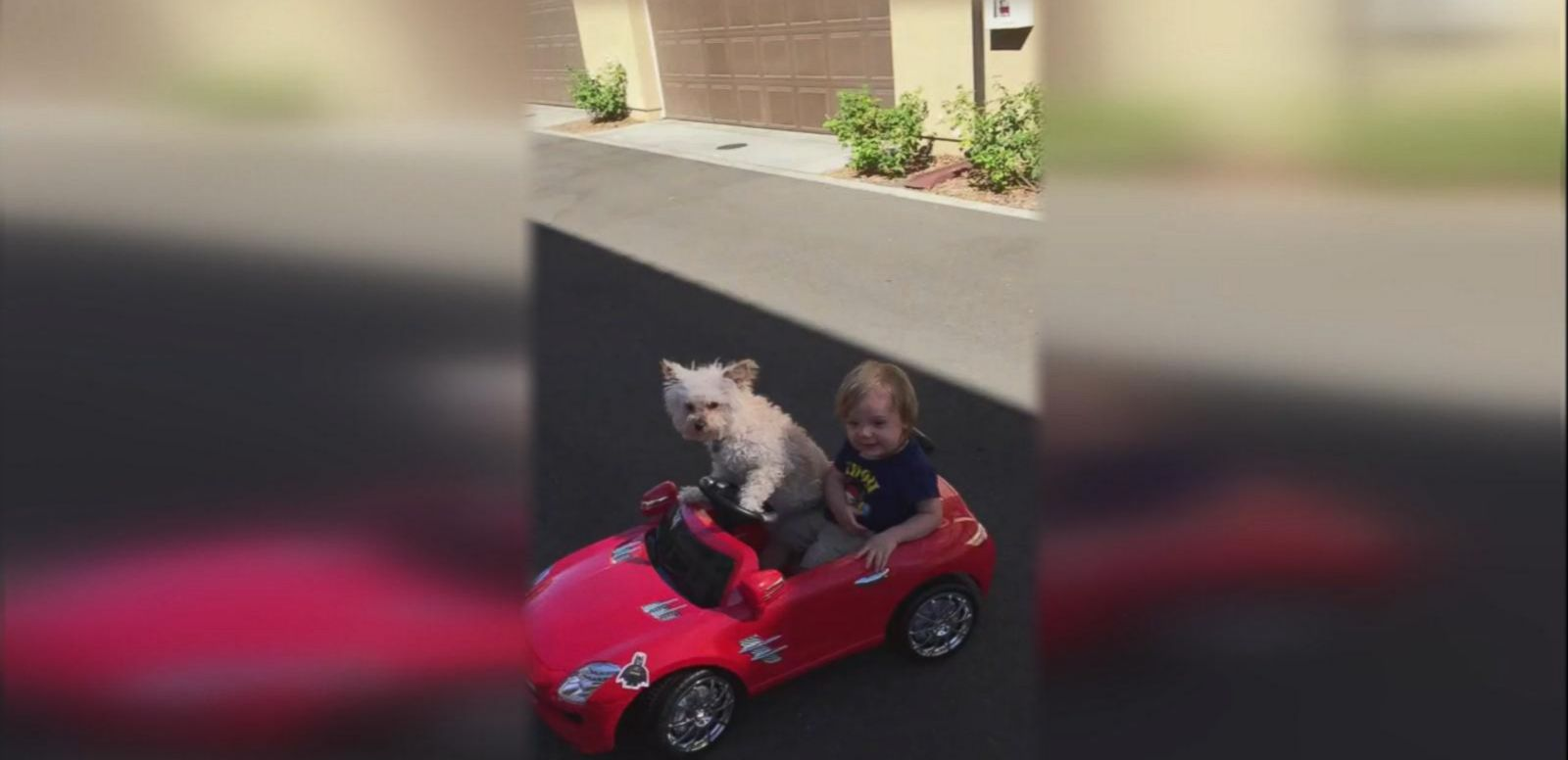 VIDEO: This Dog Puts The 'Fur' In Chauffeur