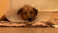 VIDEO: Doctors credit the dogs survival to his thick skull and trajectory of the bullet.
