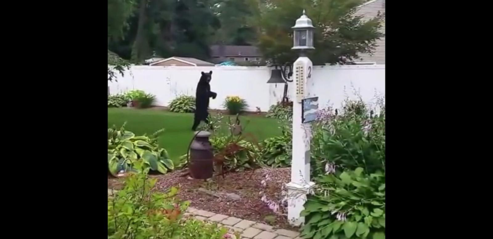 VIDEO: A bear is seen walking upright on his two hind legs in this still from a video taken from a home in Oak Ridge, New Jersey, on July 17, 2015.