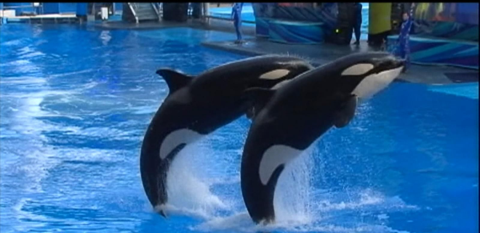 VIDEO: Controversy Ignites As SeaWorld Tries To Build Bigger Tanks for Its Killer Whales