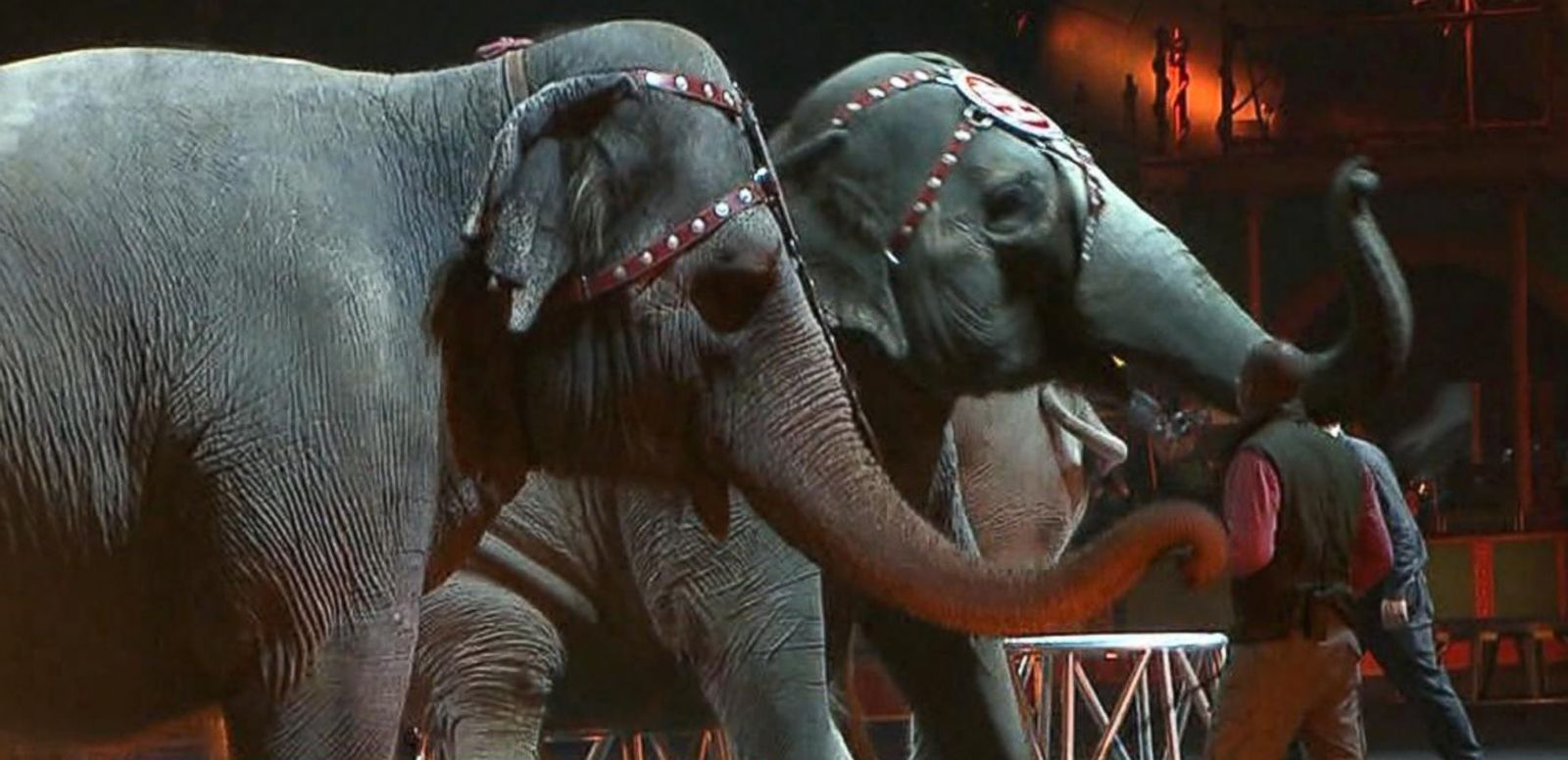 VIDEO: Could Elephants Hold The Secret To Curing Cancer?