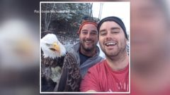 VIDEO: The two Canadian men freed the eagle from a trap during a walk in the woods.