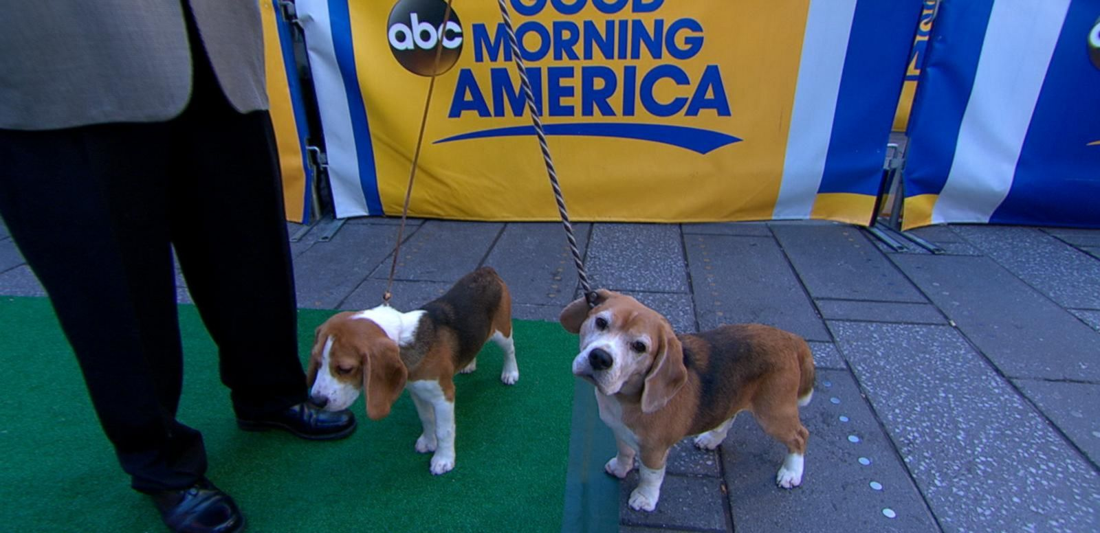 VIDEO: GMA Goes to the Dogs: 5 Most Popular AKC Breeds Announced