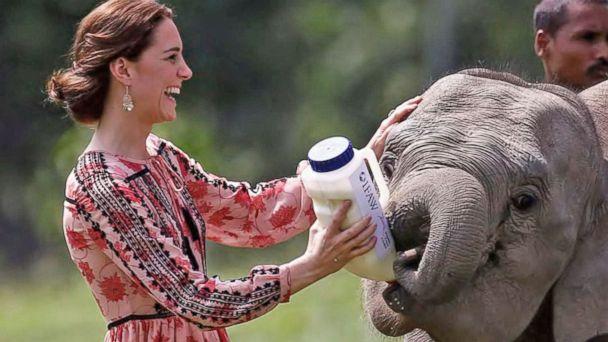 New ESl lesson plans - Prince William, Kate Go on Safari in India