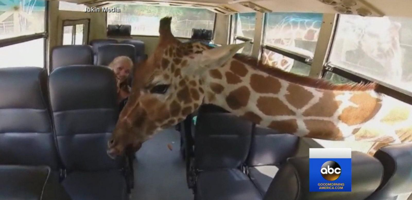 VIDEO: Giraffe Surprises Safari Park Visitors