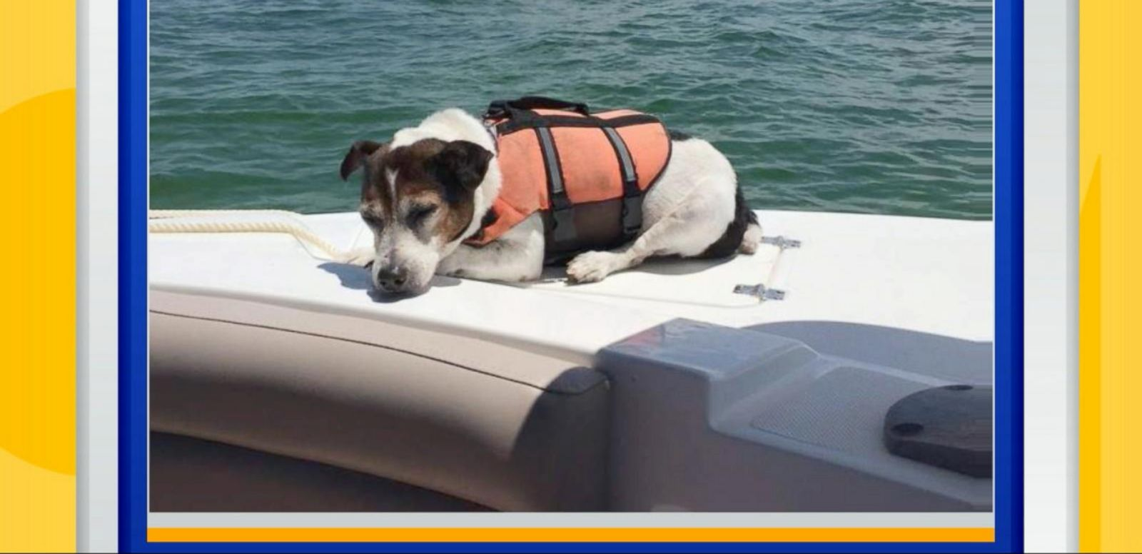 VIDEO: Rescuers Pull Jack Russell Terrier From the Ocean