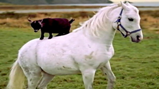 Tourism Ad Has Goat on a Horse
