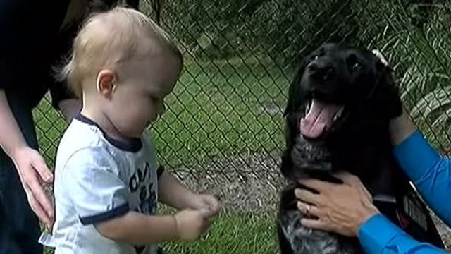 VIDEO: Benjamin and Hope Jordan credit their dog with raising suspicions about their sons babysitter.